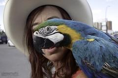 very colourful cool Macaw (zawaski) Tags: zawaski©2018 alberta beauty canada naturallight noflash canmore ambientlight calgary rockymountains love canonef2035mmf3545usm