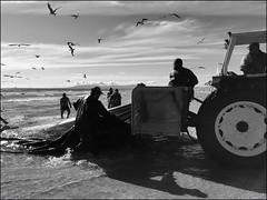 Portugal - The Fishing Net (Christian Lagat) Tags: portugal costadacaparica ocean plage beach pêche fishing noiretblanc blackwhite tracteur tractor filet net pêcheurs fishermen ombre shadow mouettes seagulls