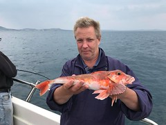 "Pete Wilkins - Red Gurnard • <a style=""font-size:0.8em;"" href=""http://www.flickr.com/photos/113772263@N05/42555039114/"" target=""_blank"">View on Flickr</a>"
