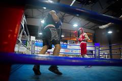 30736 - Face Off (Diego Rosato) Tags: nikon d700 2470mm tamron rawtherapee boxelatina boxe boxing pugilato ring match incontro face off