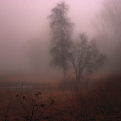 Morning mist. (ibjfoto) Tags: tåge beforesunrise danmark denmark gadstrup gadstrupmose gadstrupswamp ibjensen ibjfoto natur sealand sjælland mist morgentåge morningmist trees træer