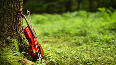 Art & nature (zampination) Tags: violin woods nature forests green art canon 450d asahi pentax smc takumar 50mm f14 product photography music