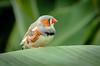 Finchy (Stephen Reed) Tags: bird nikon d7000 lightroomcc