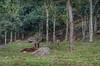 Kyra (mcvmjr1971) Tags: nikon d7000 parque estadual tres picos mmoraes nova friburgo rio de janeiro 2018 travel viagem 4x4