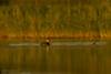 Red-necked Grebe (Podiceps grisegena) Rudakaklis kragas