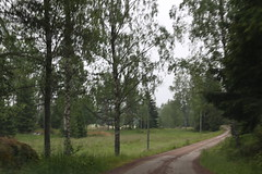 Country road (liisatuulia) Tags: porkkala dilojun2018 road gravel birch