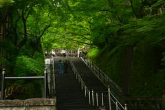 DSC_0039 (sxcxxhx) Tags: japan osaka kyoto hydrangea flower trip voyage 日本 大阪 京都 旅行