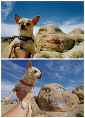It's Floyd Day! (EllenJo) Tags: greetingsfromfloydstreet greetingsfromfloydst redux 2005 2017 nightmarerock inyonationalforest california sierras centralcalifornia lonepine ca ellenjo floyd chihuahua happybirthdayfloyd beloved pet dog face granite alabamahills