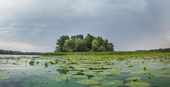 Green World (Alex Demich) Tags: panorama landscape island lilies trees clouds storm nature wilderness wild river water surface summer plants rain thunder sky leaves flowers green gray kayaking outdoor tourism ukraine dnipro