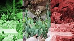 The Mexican national emblem, Chapultepec Park, Mexico City. (yaotl_altan) Tags: cdmx mexicocity ciudaddeméxico mexique mexikostadt mexiko cidadedoméxico cittàdelmessico ciutatdemèxic мехико мексика mèxic méxico messico