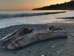 IMG_E2922.jpg (Paul T. Marsh/PositivePaul) Tags: paulmarshphotography paultmarsh victoriabc vancouverisland lightroomcc iphone april2018 canada pacificnorthwest britishcolumbia wwwpaulmphotographycom 2018