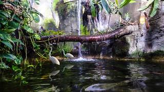 Waterfall - 5515