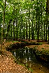 Brook in the woods (cstevens2) Tags: sherenbos belgique belgium belgië malle oostmalle bomen bos forest woods water stream nature natuur trees