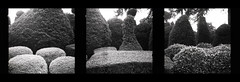Brodsworth Topiary (pho-Tony) Tags: agfacopex nationaltrust agfaisorapidc rapid 24x24 24mmx24mm agfarapid compact square squareformat isitar f82 182 agfaisitar vintage veteran agfa copex agfacopexrapid microfilm copy contrast iso50 rodinal