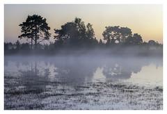 Drying Puddle (P_Hibon) Tags: kalmthoutseheide putsemoer blauwelucht mist ochtend ven water puddle belgië belgium noclouds landschap landscape morning zonsopgang sunrise