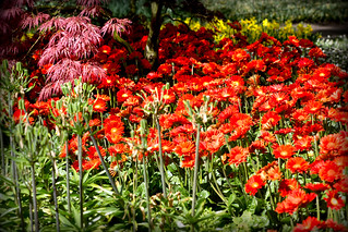 Red Mixture _3311