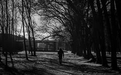 Camino de sombras (leaacz) Tags: blackandwhite sombras monocromo negros blancos old silueta