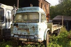 DHR 448L (EBAY WRECKS.) Tags: ebaywrecks wreck scrap rust ford dseries truck