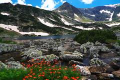 Рила, връх Харамията и Рибното езеро (sevdelinkata) Tags: mountain rock peak sky water flower lake landscape rila bulgaria