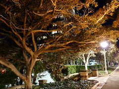 P1320488 (dudegeoff) Tags: 20180624bsydhydeparkatnight hydepark sydney australia nsw 2018 june night 20180623bsydhydeparkatnight 20180623csydhydeparkatnight