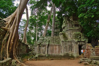 Trees overgrowing the temple ruins of Ta Prohm a.k.a. the jungle temple, Siem Reap, Cambodia