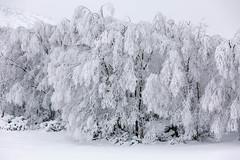 un poco de frio.... (hilariopv) Tags: hilarioperez ancares frio nieve gélido helado invierno