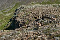 6-august-kotlugengi-sandfellsleid_161 (Stefán H. Kristinsson) Tags: sandfellsleið hundar dogs hiking reykjanes sandfell nikond800 tamron2875mm iceland ísland summer ágúst 2018 sunshine