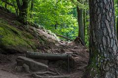 Aufwärts (JBsLightAndShadow) Tags: rheinlandpfalz rhinelandpalatinate pfalz palatinate 2018 sommer2018 sommer summer2018 summer nikon nikond750 tamron tamronsp2470mmf28divcusd wandern wanderung hiking hike trifels annweiler annweilerburgenweg annweilercastletrail wanderweg trail pfälzerwald palatineforest südpfalz southernpalatinate deutschland germany