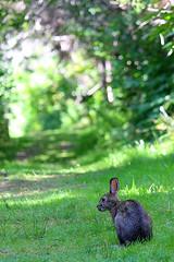 Path to the sea (cheryl.rose83) Tags: rabbit path bunny