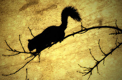 Going out on a limb. (Southern Darlin') Tags: squirrel art yellow texture black branch