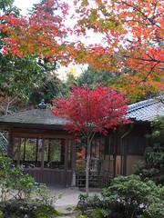a (45) (hiromi89) Tags: japan beauty beautiful scenery flower wood pond