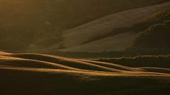 Toscana - Morning Light (W_von_S) Tags: toscana toskana tuscany italien italia italy cretesenesi crete landschaft landscape paysage paesaggio light licht sunrise sonnenaufgang natur nature wvons werner sony sonyilce7rm2 linien lines curves siena