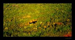 Plane shadow in rain forest (xicoleao (Thanks to 1 million views)) Tags: southamerica argentina iguazu rainforest trees
