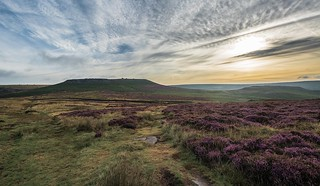 Higger Tor, Heather