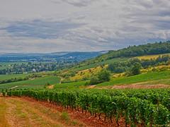 GIVRY (AleXtrem PiX) Tags: nature vine sky burgundy gx80 lumix 14140 grapes vigne raisin landscape green