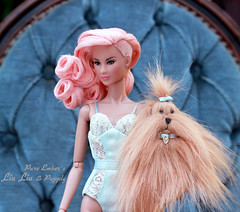 Pupply (pure_embers) Tags: pure embers doll dolls uk pureembers photography laura england fashion royalty integrity toys industry liu ling embersliuliu pink hair tan dash damboise outfit puppy cute boudoir collection