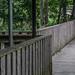 THE LACKEN WALK ALONG THE RIVER NORE [KILKENNY LINEAR PARK]-143038