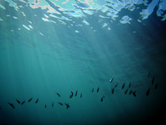 Underworld (jimiliop) Tags: underwater fish life sea light sunrays vignette mystery intotheblue depth