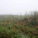 Hendry County 13719 thumbnail