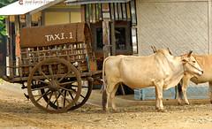 11-10-04 01 Myanmar (761) O01 (Nikobo3) Tags: asia myanmar burma birmania mandalay culturas social tuktuks rickshaw travel viajes nikon nikond200 d200 nikon7020028vrii nikobo joségarcíacobo