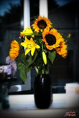 Sunflowers (psychosteve-2) Tags: sunflower lily