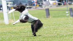 774906 (lottetoppo) Tags: olympus omd em1mark2 em1mkii 40150mm dog frisbee