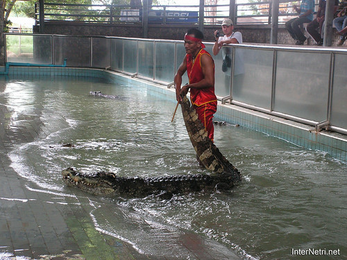 В пащу крокодилу Паттайя Таїланд Thailand InterNetri 05