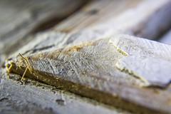 Macro Monday - Decay (OnkiPonki) Tags: wood decay paint corner nail frame photo macro macromonday macromondays canon eos 40d white old edges memories texture macromania macrotextures