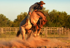 Rafael Lopes (Eduardo Amorim) Tags: gaúcho gaúchos gaucho gauchos cavalos caballos horses chevaux cavalli pferde caballo horse cheval cavallo pferd crioulo criollo crioulos criollos cavalocrioulo cavaloscrioulos caballocriollo caballoscriollos pampa campanha fronteira bagé riograndedosul brésil brasil sudamérica südamerika suramérica américadosul southamerica amériquedusud americameridionale américadelsur americadelsud cavalo 馬 حصان 马 лошадь ঘোড়া 말 סוס ม้า häst hest hevonen άλογο brazil eduardoamorim gineteada jineteada