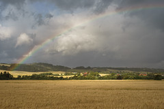 Beautiful light (Helena Normark) Tags: rainbow goldenfields barley beautifullight leinstrand leinstrandmarka trondheim sørtrøndelag trøndelag norway norge sonyalpha7ii a7ii carlzeissplanart50mmf17 cy50mm17 50mm