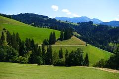 Zwischen Unterweidli und Oberweideli Eggwil (Cholgrabe) (Martinus VI) Tags: emmental eggiwil schangnau kanton de bern canton berne berna berner bernese schweiz suisse suiza switzerland svizzera swiss y180812 martinus6 martinus6xy martinusvi martinus 12082018