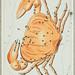 Sidney Hall's (?-1831) astronomical chart illustration of the cancer zodiac. A crab forming a constellation. Original from Library of Congress. Digitally enhanced by rawpixel.