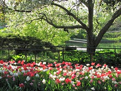 Spring Stroll Through the Garden (Cher12861 (Cheryl Kelly on ipernity)) Tags: chicagobotanicgarden glencoeillinois spring season frommay2017 tulips trees sunlight landscape