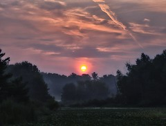 Fog. ....the Natural Sun Filter. (Steve InMichigan) Tags: sunriseglow sunrise lakesunrise morningsunrise morningsky minoltamd50mmf17 fotgamdeosmlensadapter treeline colorsky fog foggylake fogline